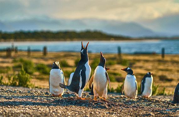 pinguinera ushuaia argentina
