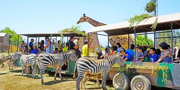 Parque-Safari-Safari-herbivaros
